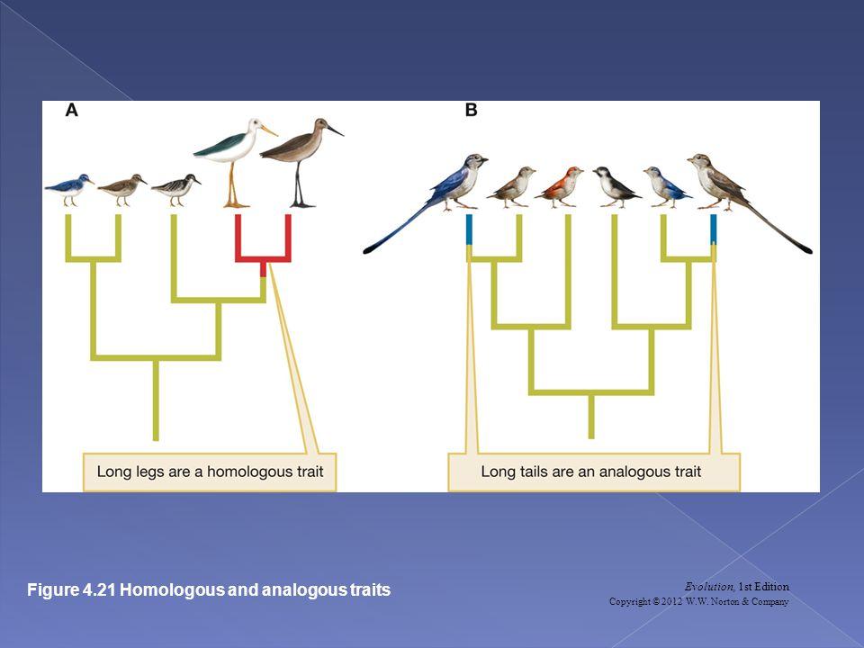 Figure 4.21 Homologous and analogous traits