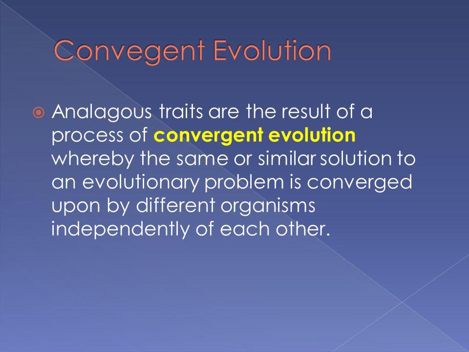Convegent Evolution