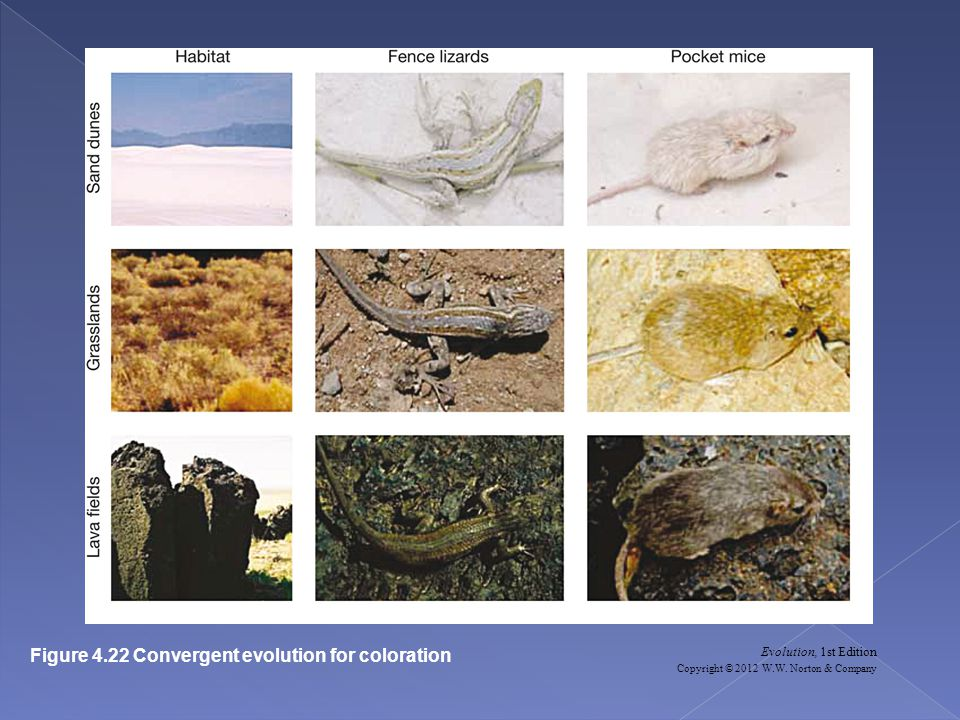 Figure 4.22 Convergent evolution for coloration