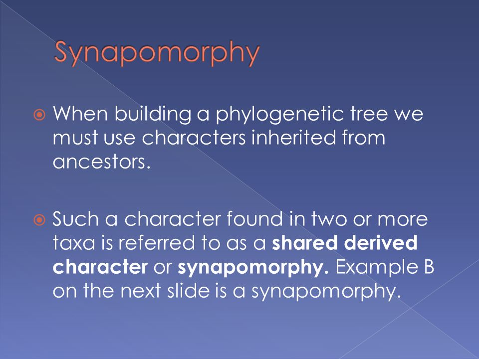 Synapomorphy When building a phylogenetic tree we must use characters inherited from ancestors.