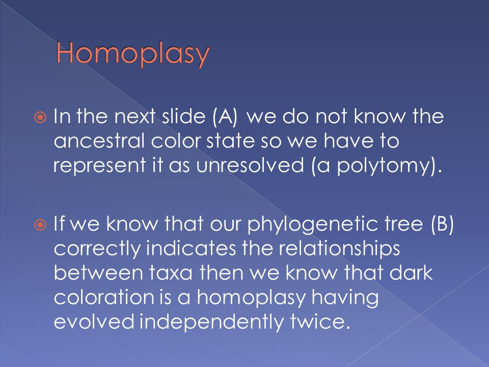 Homoplasy In the next slide (A) we do not know the ancestral color state so we have to represent it as unresolved (a polytomy).