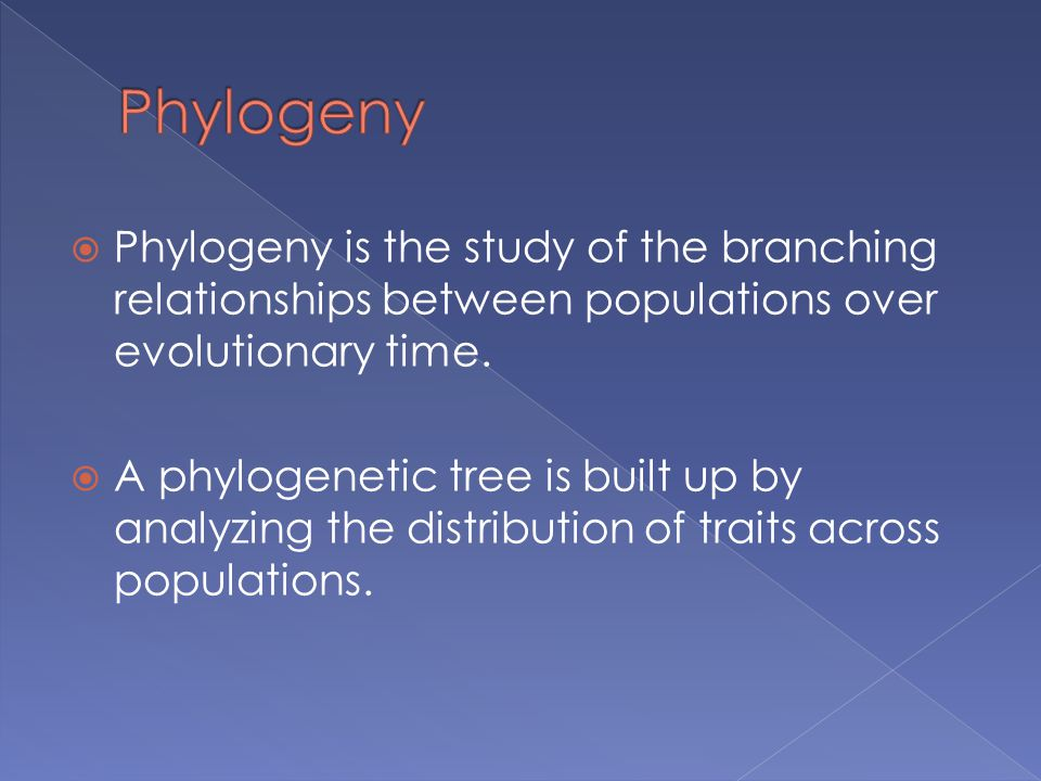 Phylogeny Phylogeny is the study of the branching relationships between populations over evolutionary time.