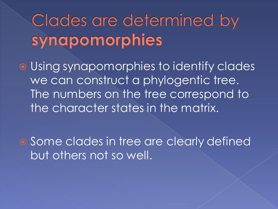 Clades are determined by synapomorphies