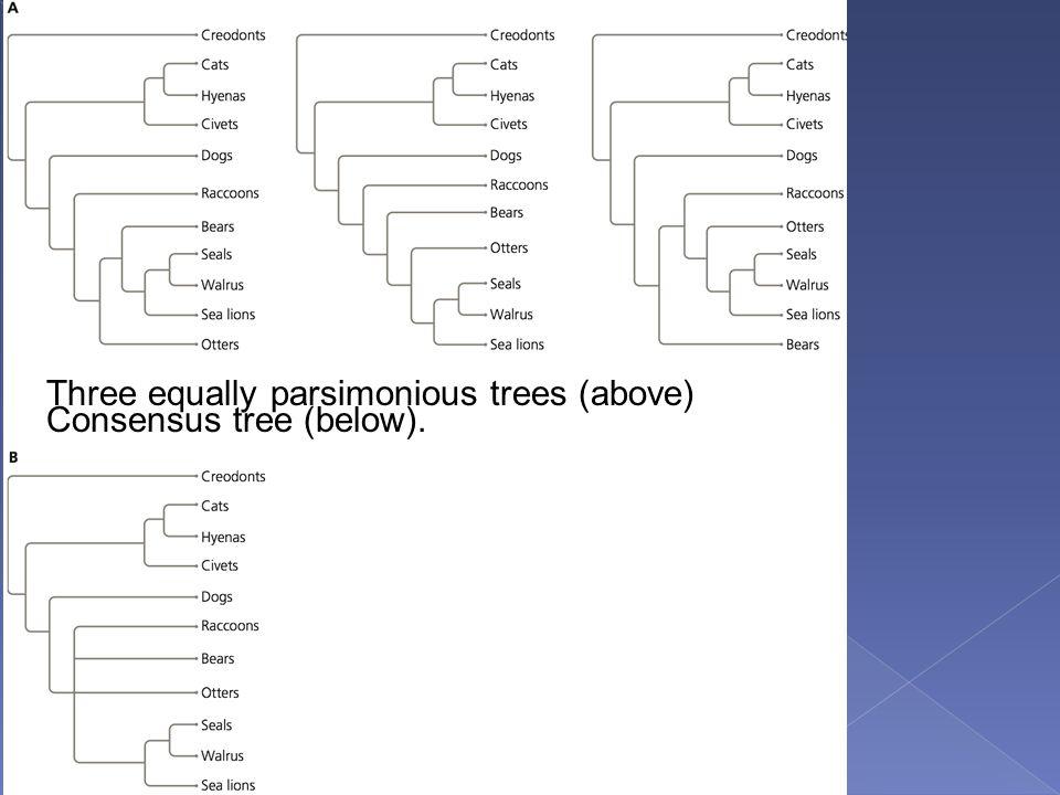 Three equally parsimonious trees (above)