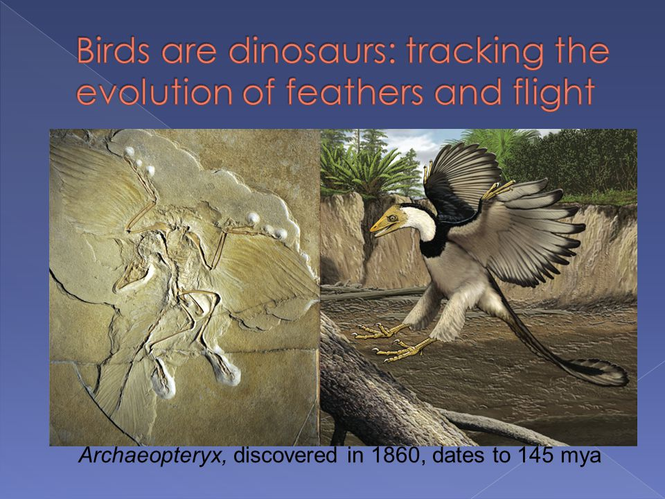 Birds are dinosaurs: tracking the evolution of feathers and flight