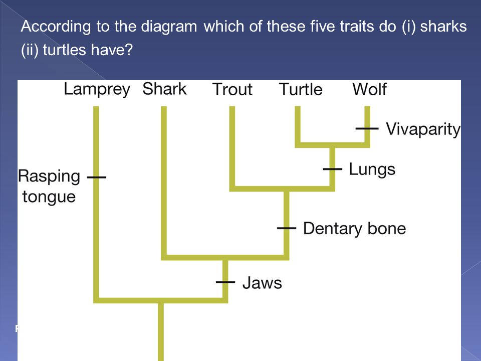 According to the diagram which of these five traits do (i) sharks