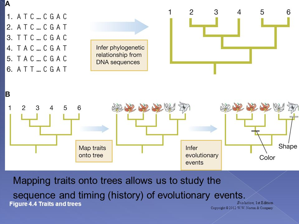Mapping traits onto trees allows us to study the