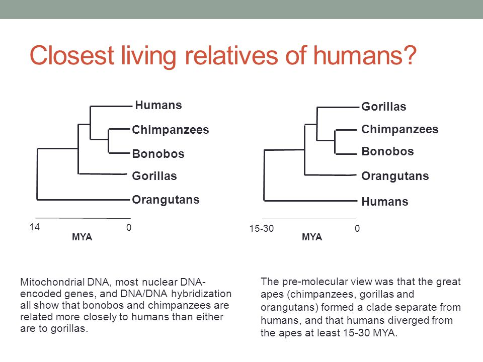 Closest living relatives of humans