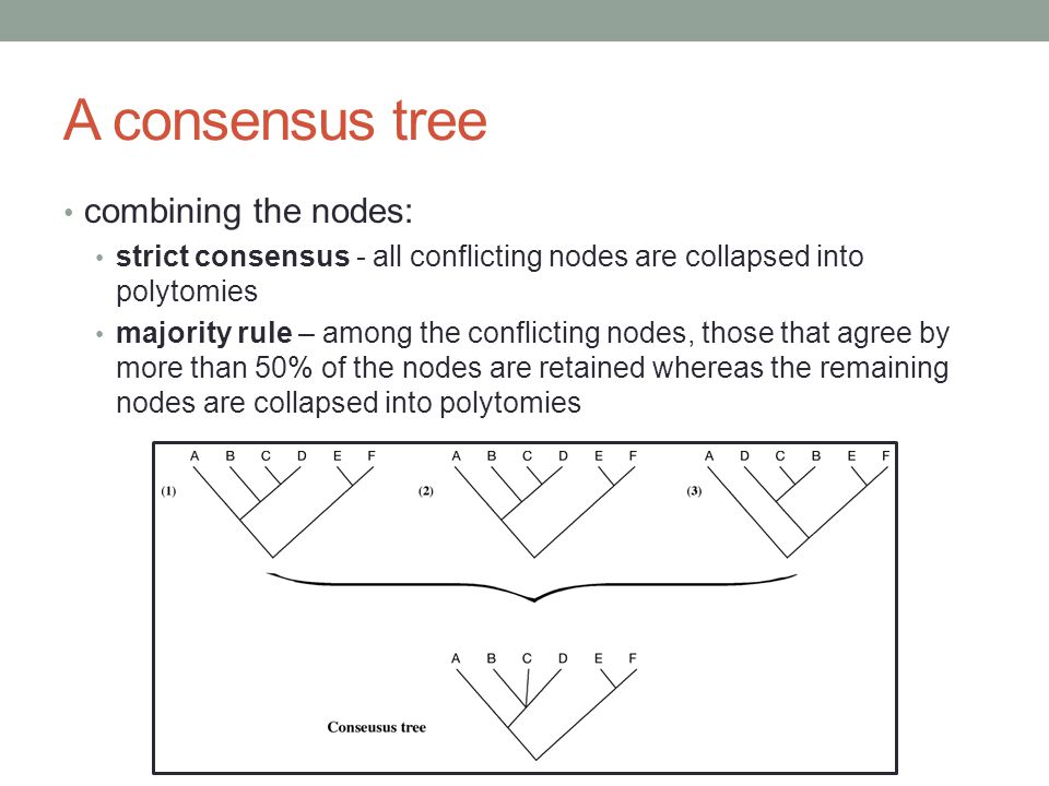 A consensus tree combining the nodes: