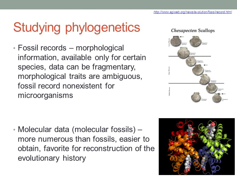 Studying phylogenetics