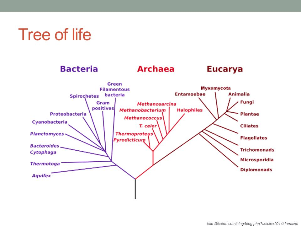 Tree of life - principal relationships among prokaryotic domains Bacteria and Archaea.