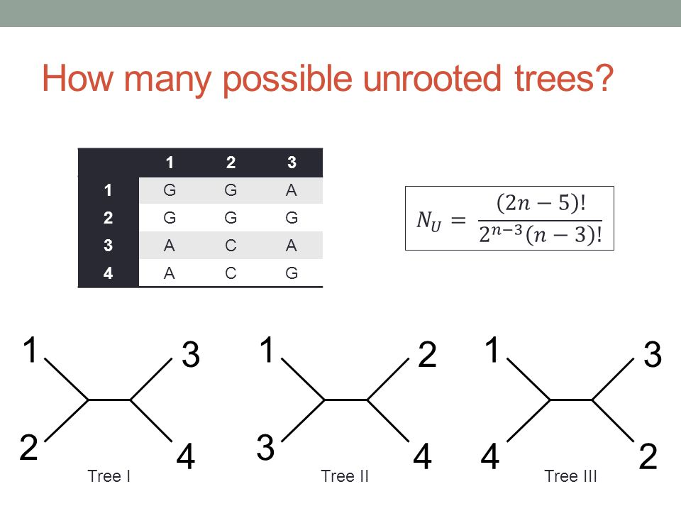 How many possible unrooted trees