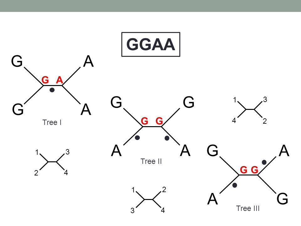 GGAA G A G A G A G A G G G G 1 4 3 2 Tree I 1 2 3 4 Tree II 1 3 2 4