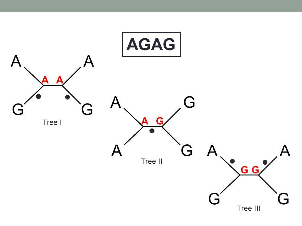 AGAG A G A A A G Tree I A G A G Tree II G G Tree III