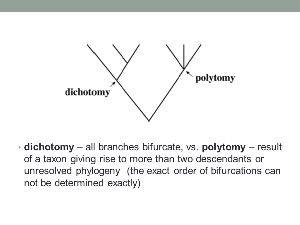 dichotomy – all branches bifurcate, vs