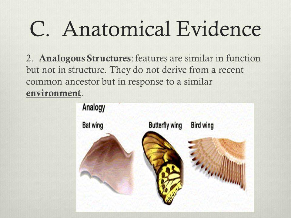 C. Anatomical Evidence