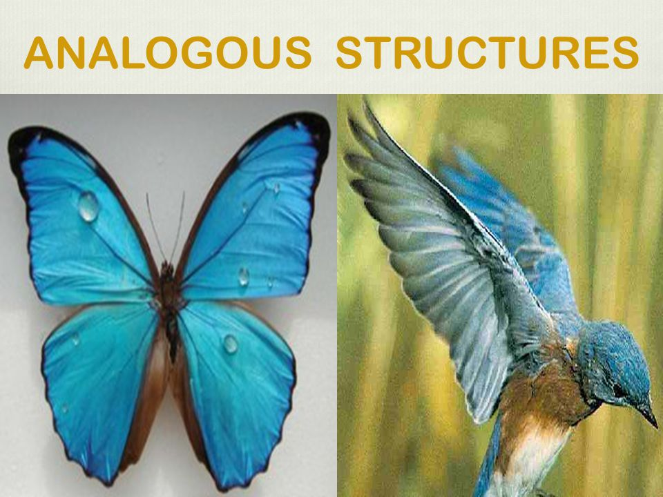 ANALOGOUS STRUCTURES