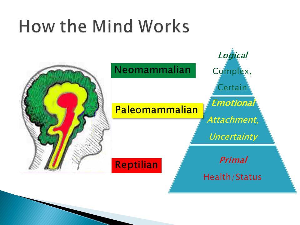 How the Mind Works Neomammalian Paleomammalian Reptilian Emotional