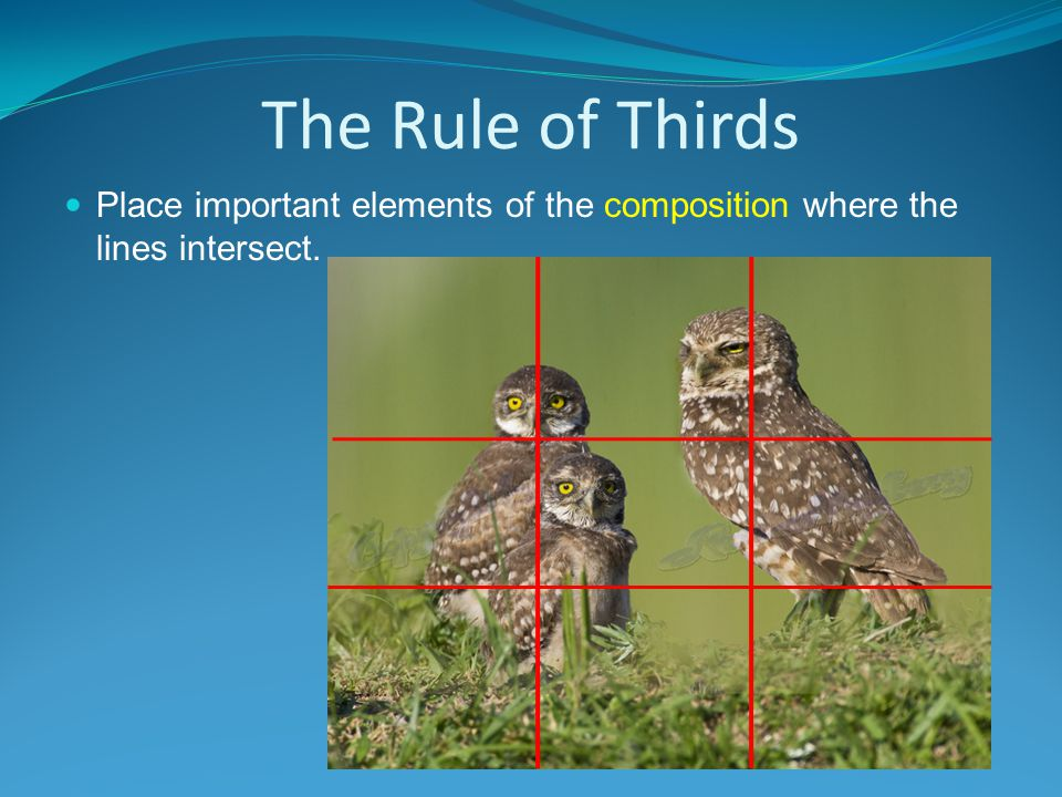 The Rule of Thirds Place important elements of the composition where the lines intersect.