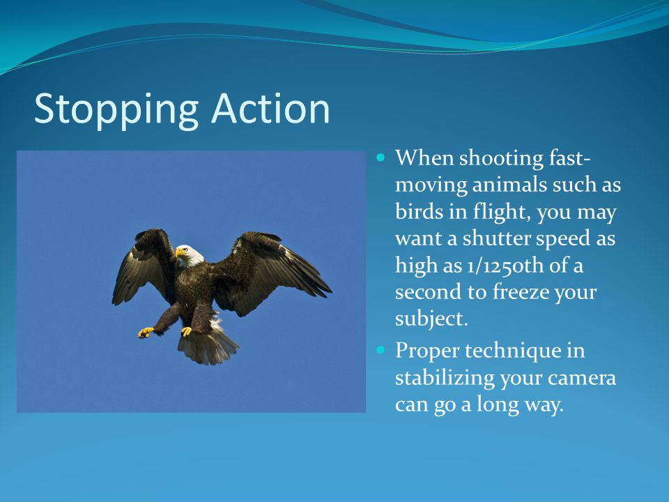 Stopping Action