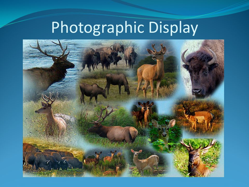 Photographic Display