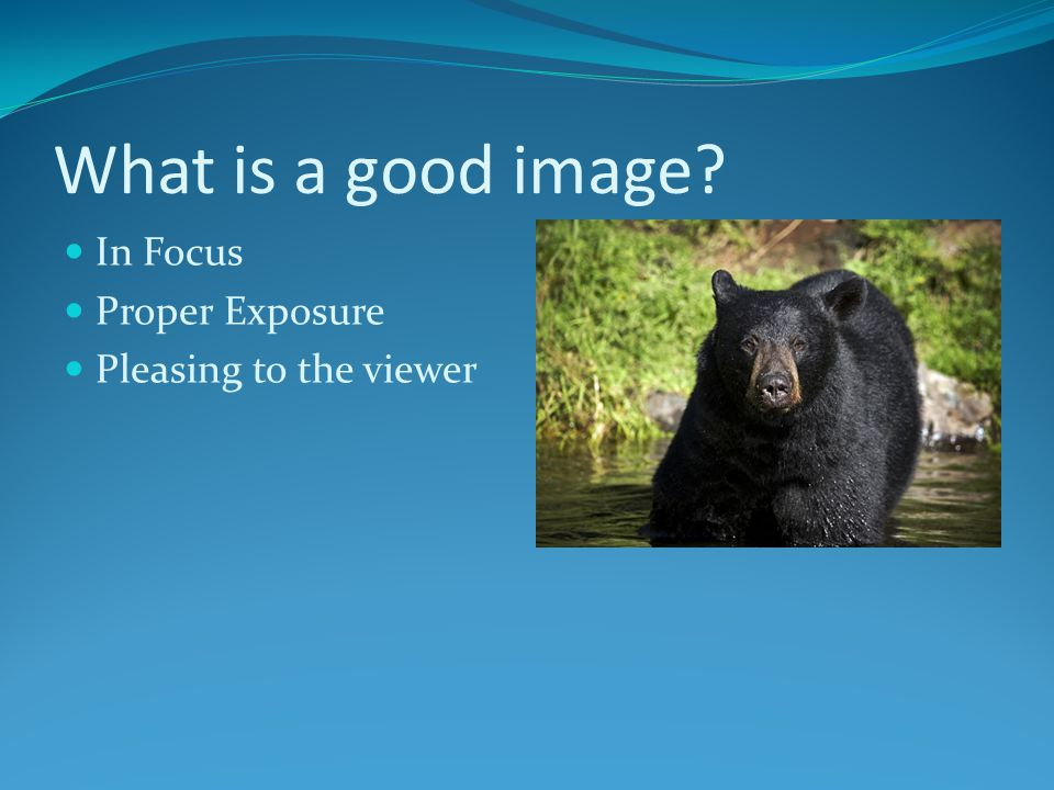 What is a good image In Focus Proper Exposure Pleasing to the viewer