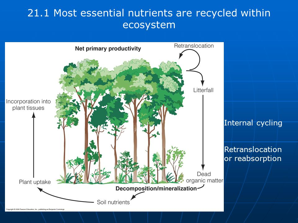 21.1 Most essential nutrients are recycled within ecosystem