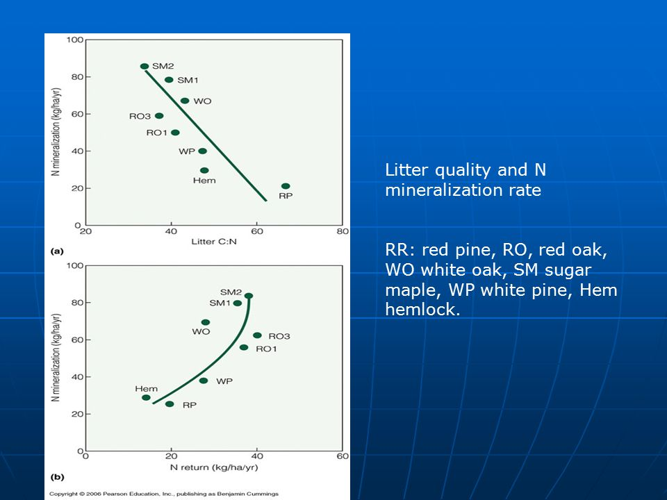 Litter quality and N mineralization rate