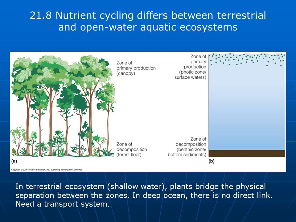 21.8 Nutrient cycling differs between terrestrial and open-water aquatic ecosystems