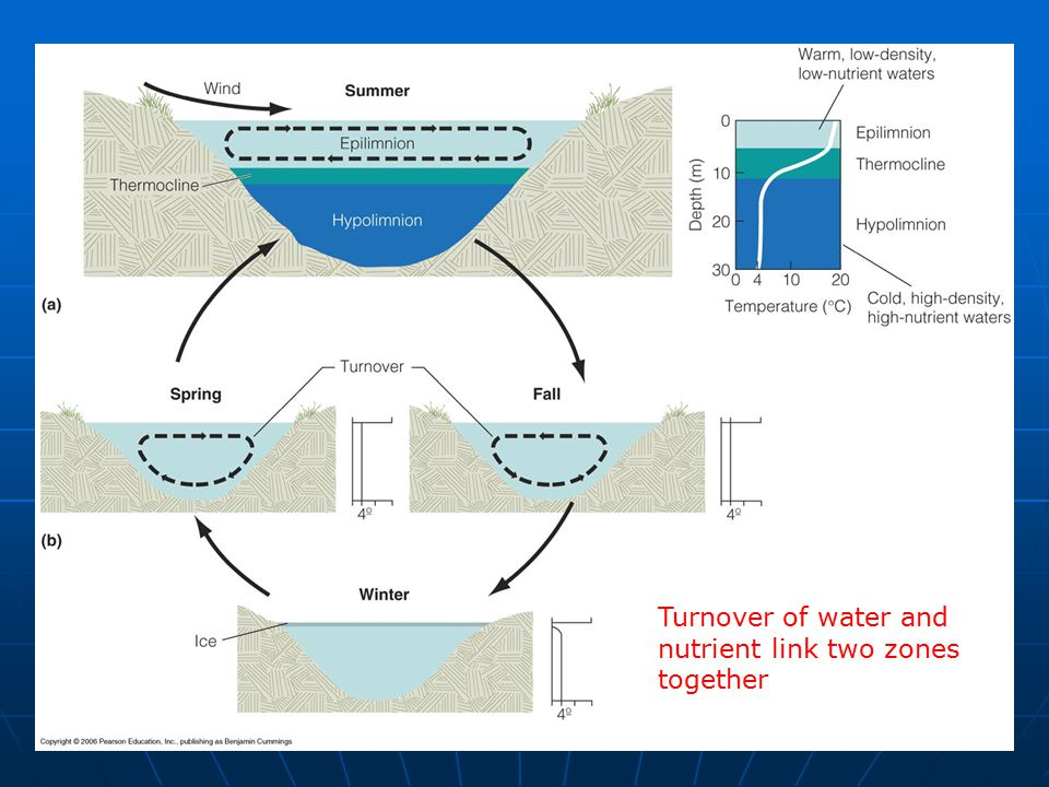 Turnover of water and nutrient link two zones together