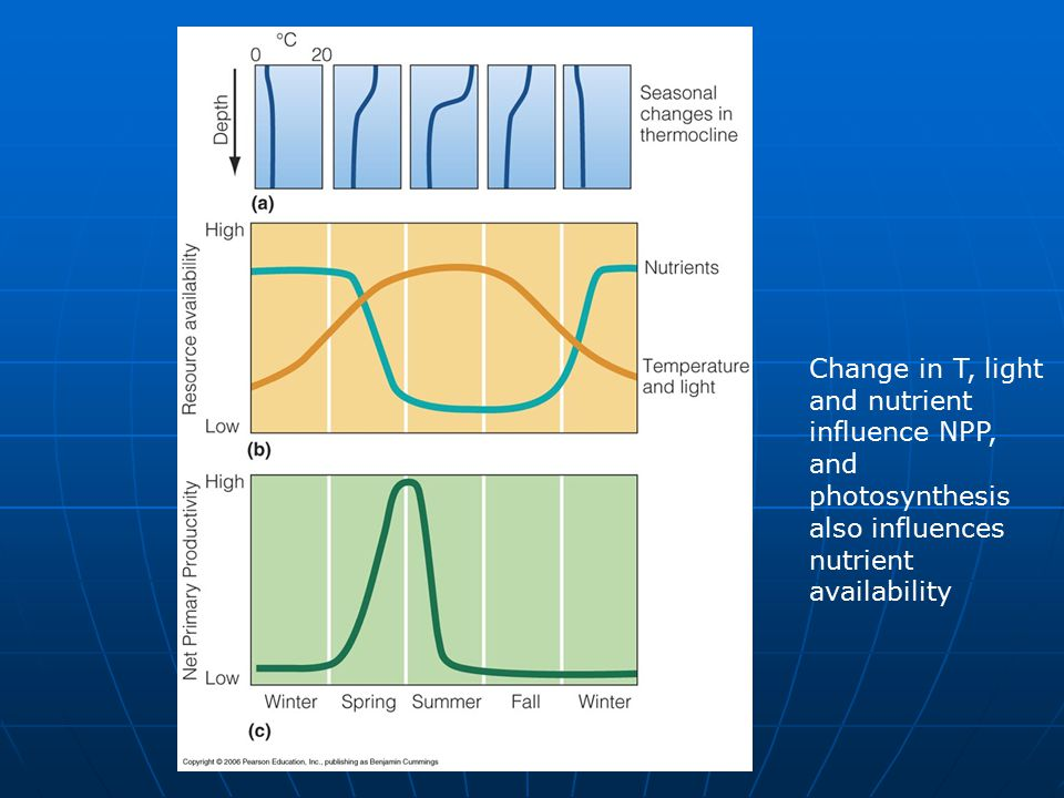 Change in T, light and nutrient influence NPP, and photosynthesis also influences nutrient availability