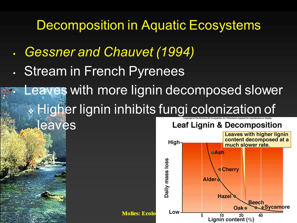 Decomposition in Aquatic Ecosystems