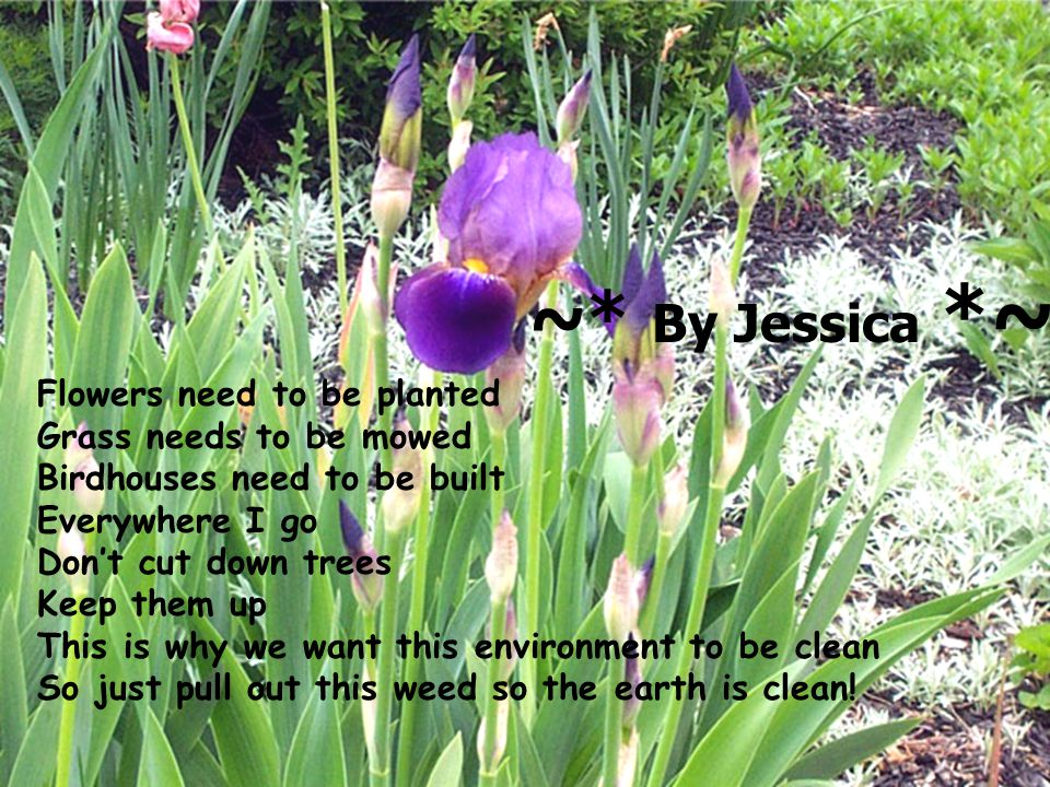 ~* By Jessica *~ Flowers need to be planted Grass needs to be mowed