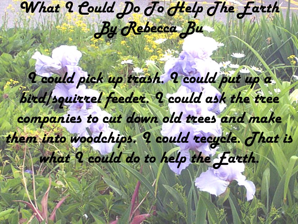 What I Could Do To Help The Earth By Rebecca Bu