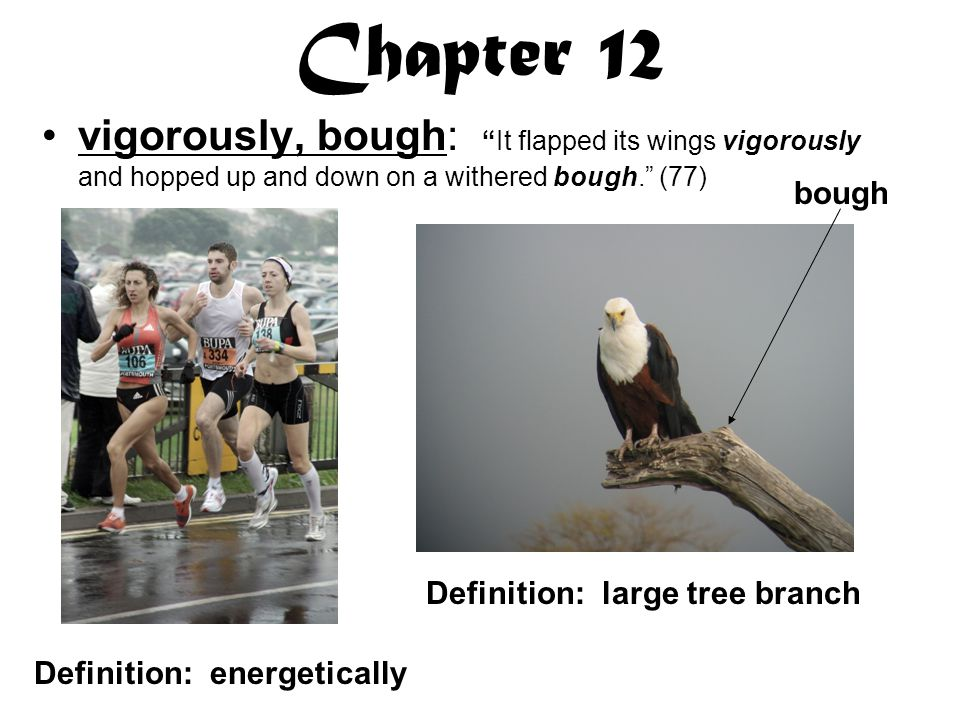 Chapter 12 vigorously, bough: It flapped its wings vigorously and hopped up and down on a withered bough. (77)