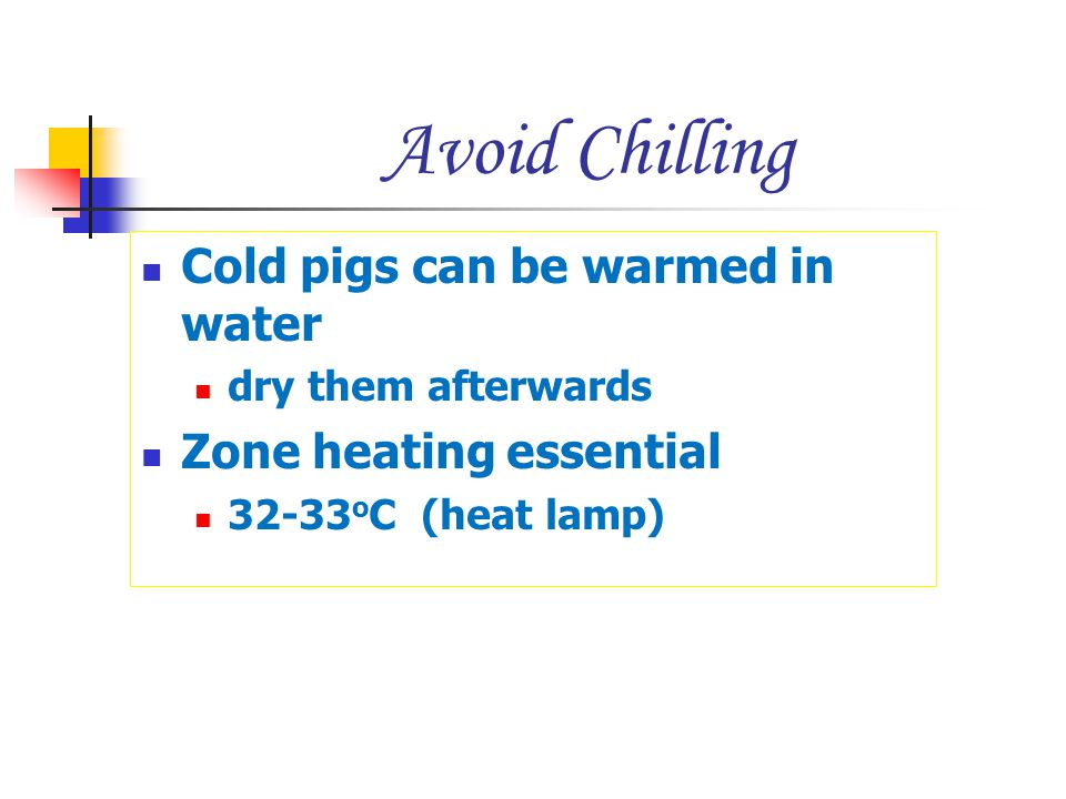 Avoid Chilling Cold pigs can be warmed in water Zone heating essential