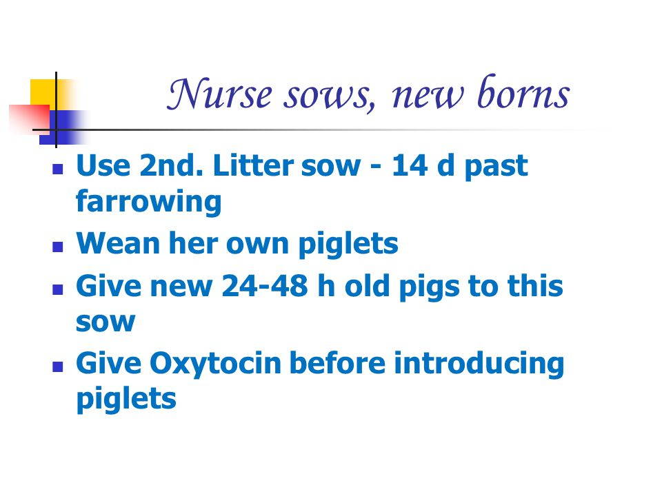 Nurse sows, new borns Use 2nd. Litter sow - 14 d past farrowing