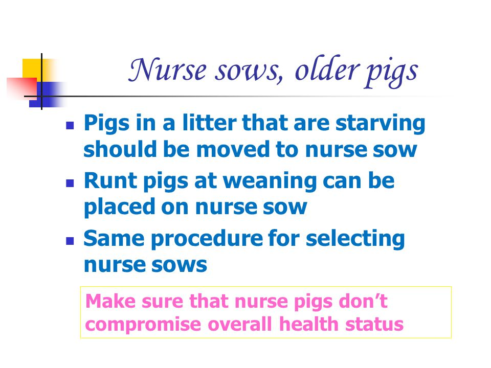 Nurse sows, older pigs Pigs in a litter that are starving should be moved to nurse sow. Runt pigs at weaning can be placed on nurse sow.