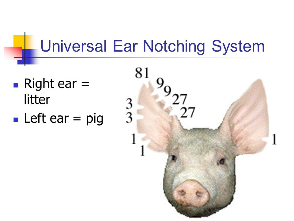 Universal Ear Notching System