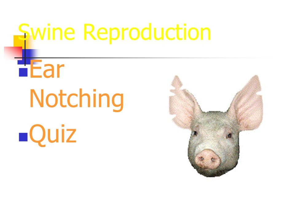 Swine Reproduction Ear Notching Quiz