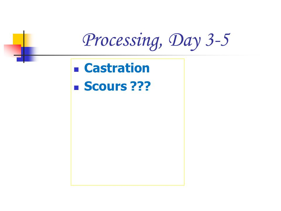 Processing, Day 3-5 Castration Scours