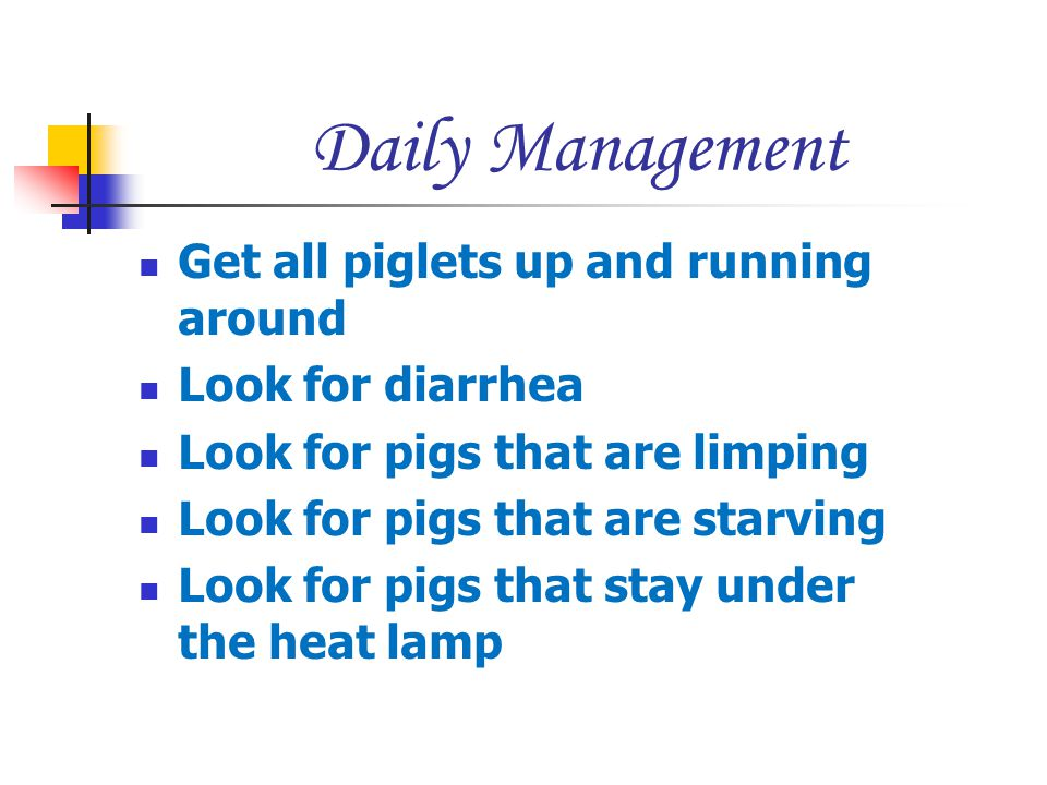 Daily Management Get all piglets up and running around
