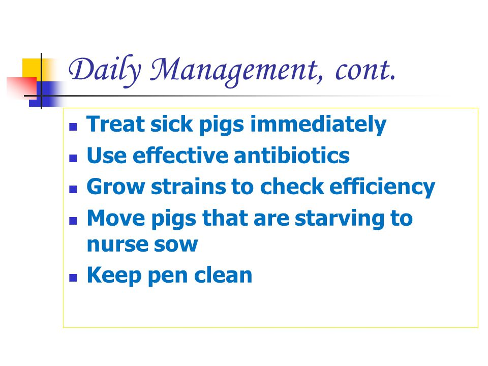 Daily Management, cont. Treat sick pigs immediately