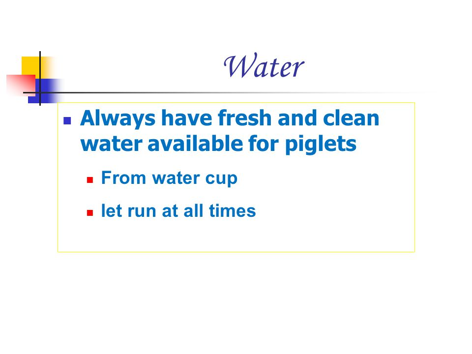 Water Always have fresh and clean water available for piglets