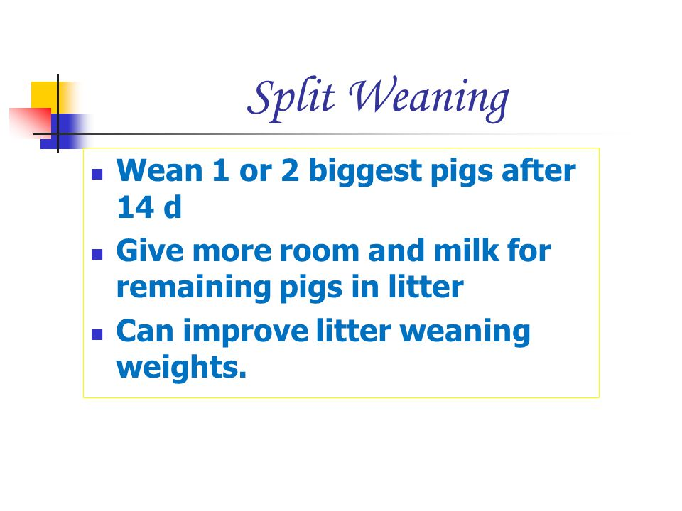 Split Weaning Wean 1 or 2 biggest pigs after 14 d