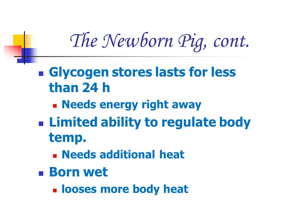 The Newborn Pig, cont. Glycogen stores lasts for less than 24 h