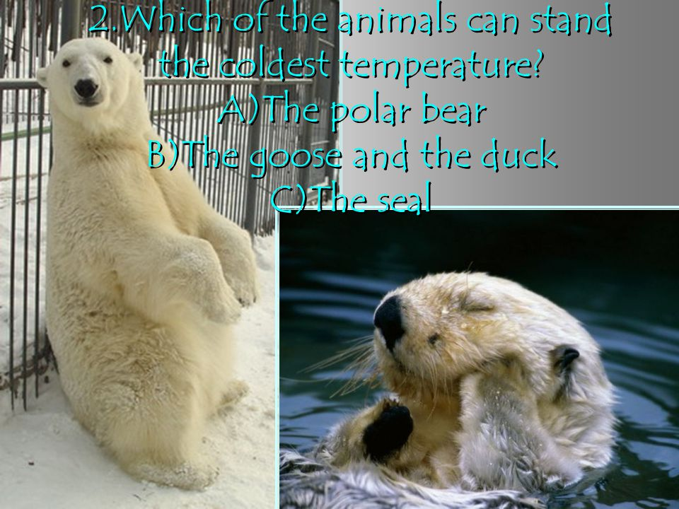 2. Which of the animals can stand the coldest temperature