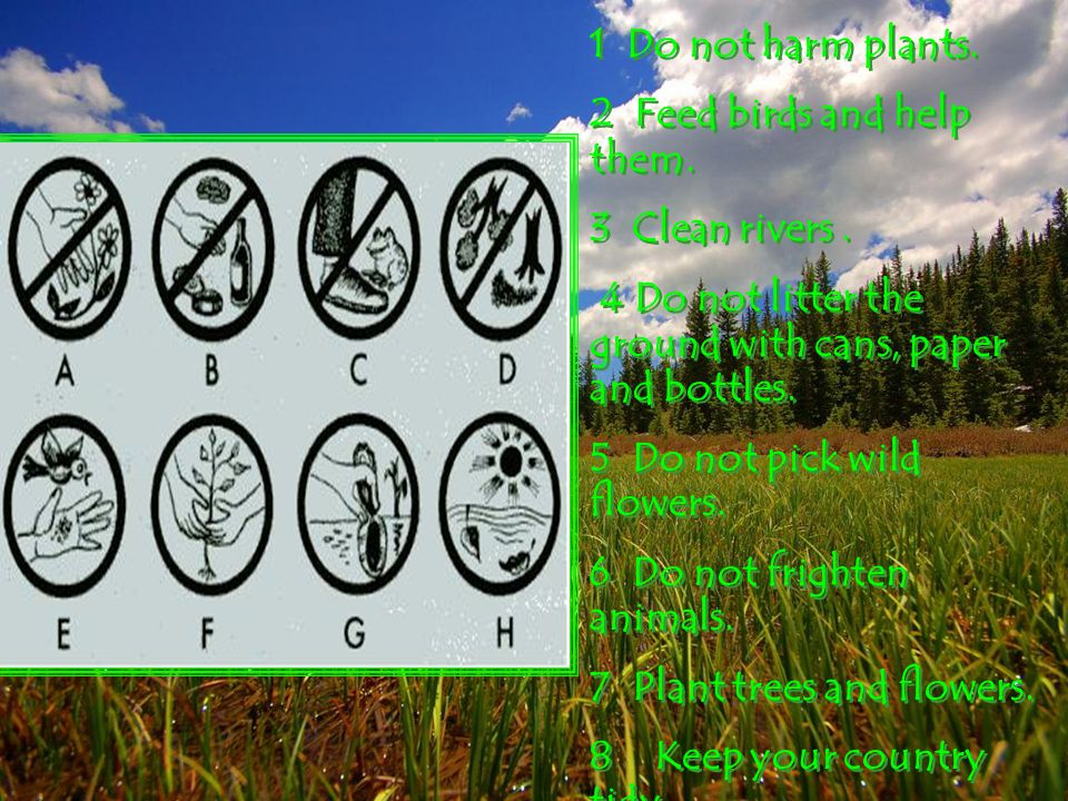 1 Do not harm plants. 2 Feed birds and help them. 3 Clean rivers . 4 Do not litter the ground with cans, paper and bottles.