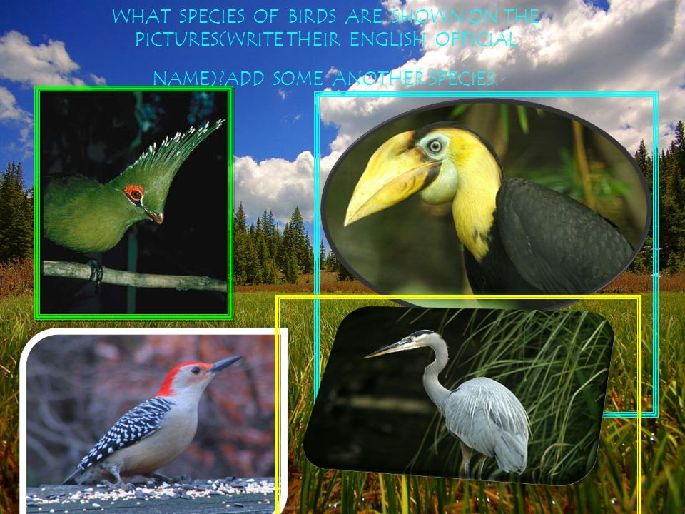WHAT SPECIES OF BIRDS ARE SHOWN ON THE PICTURES(WRITE THEIR ENGLISH OFFICIAL NAME) ADD SOME ANOTHER SPECIES.