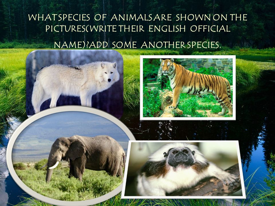 WHAT SPECIES OF ANIMALS ARE SHOWN ON THE PICTURES(WRITE THEIR ENGLISH OFFICIAL NAME) ADD SOME ANOTHER SPECIES.